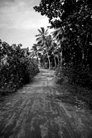 """Dominican Republic"", Adventure, Wildlife, Wilderness, Exotic, Travel, Tropical. ""Dirt Road"""