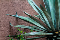 Florida, Adventure, Wildlife, Wilderness, Exotic, Travel, Tropical, Agave